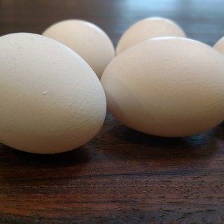 Incredible Eggs